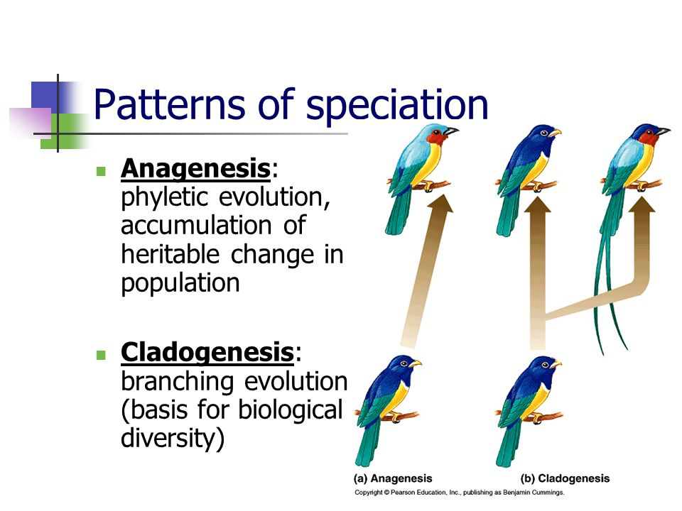 Patterns of speciation