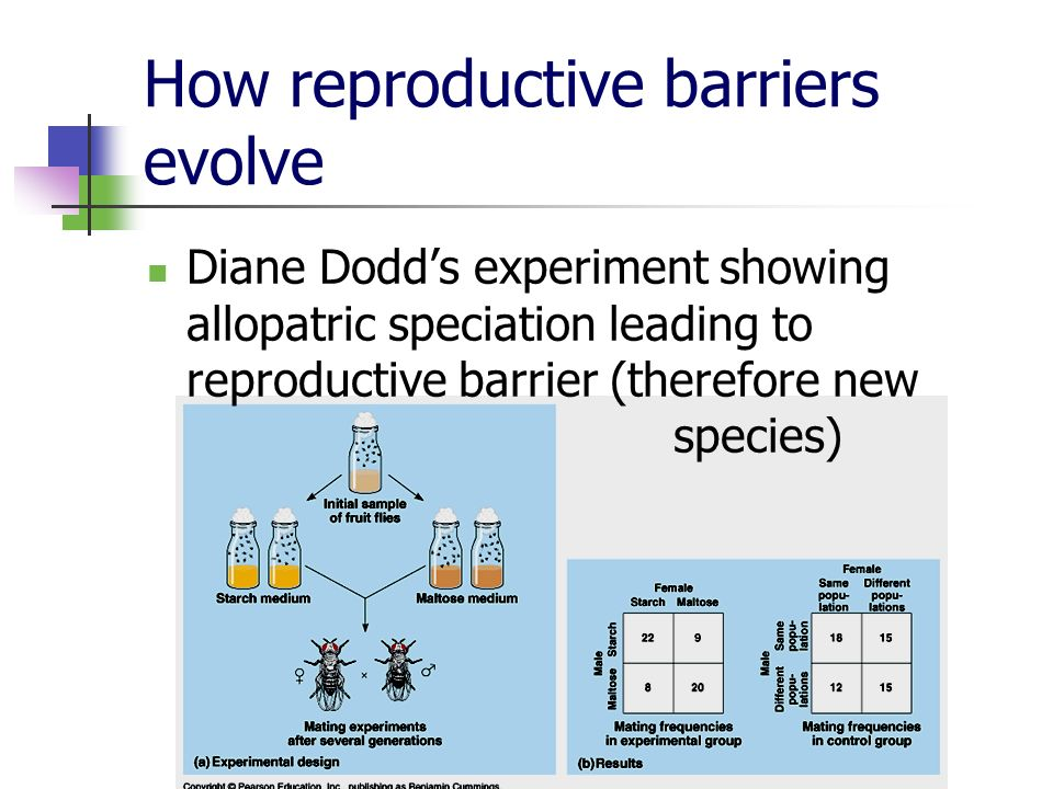 How reproductive barriers evolve