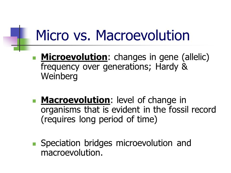 Micro vs. Macroevolution