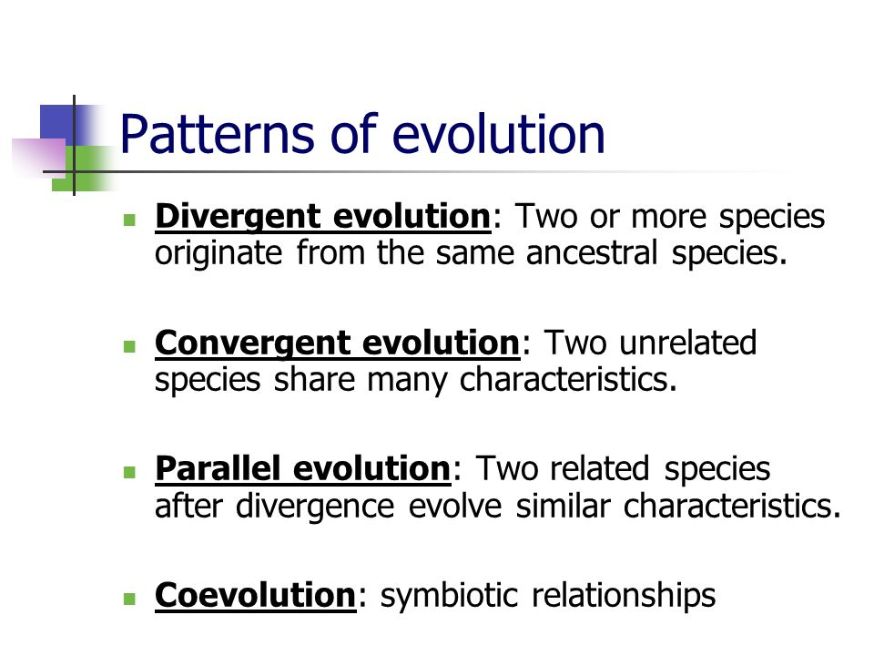 Patterns of evolution Divergent evolution: Two or more species originate from the same ancestral species.