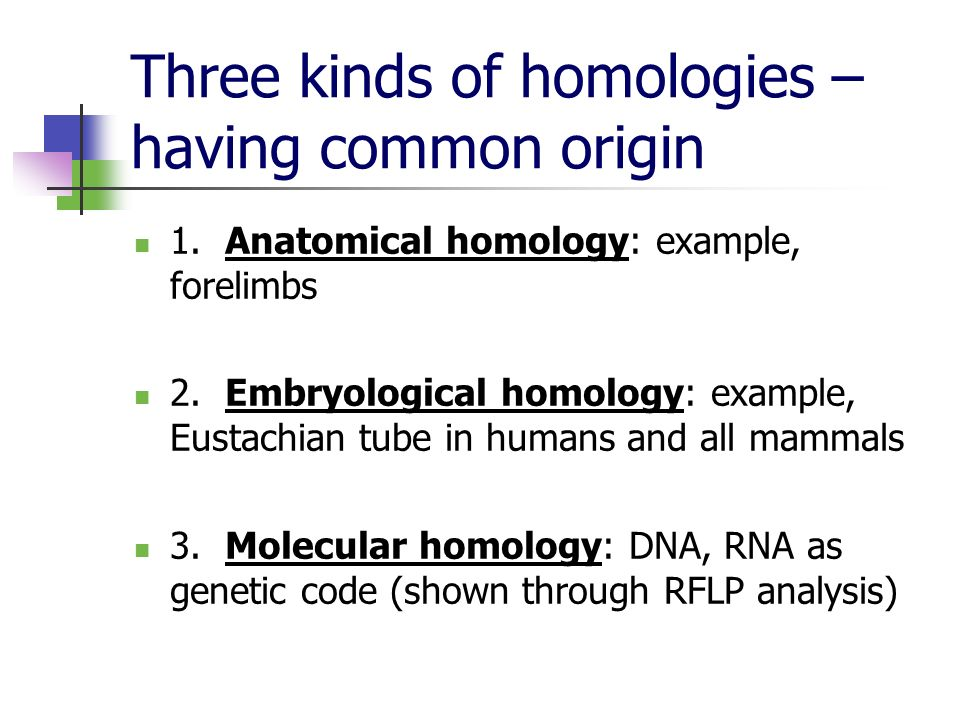 Three kinds of homologies – having common origin