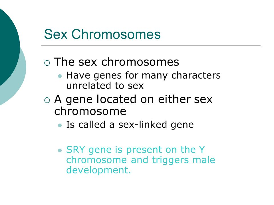 Sex Chromosomes The sex chromosomes