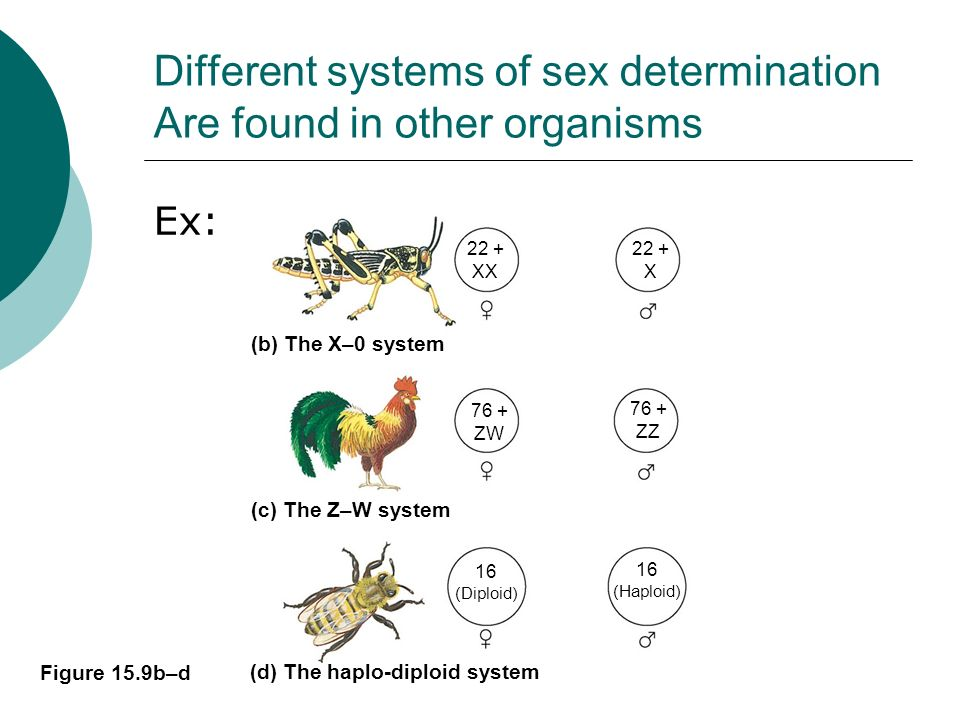 Different systems of sex determination Are found in other organisms