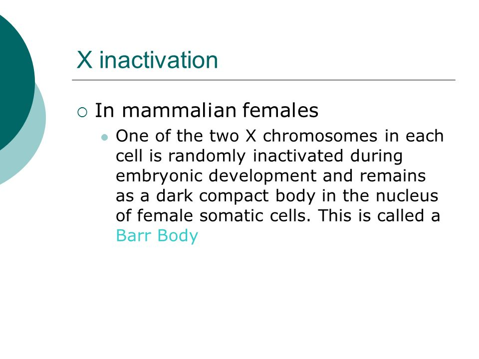X inactivation In mammalian females