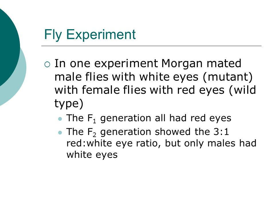 Fly Experiment In one experiment Morgan mated male flies with white eyes (mutant) with female flies with red eyes (wild type)