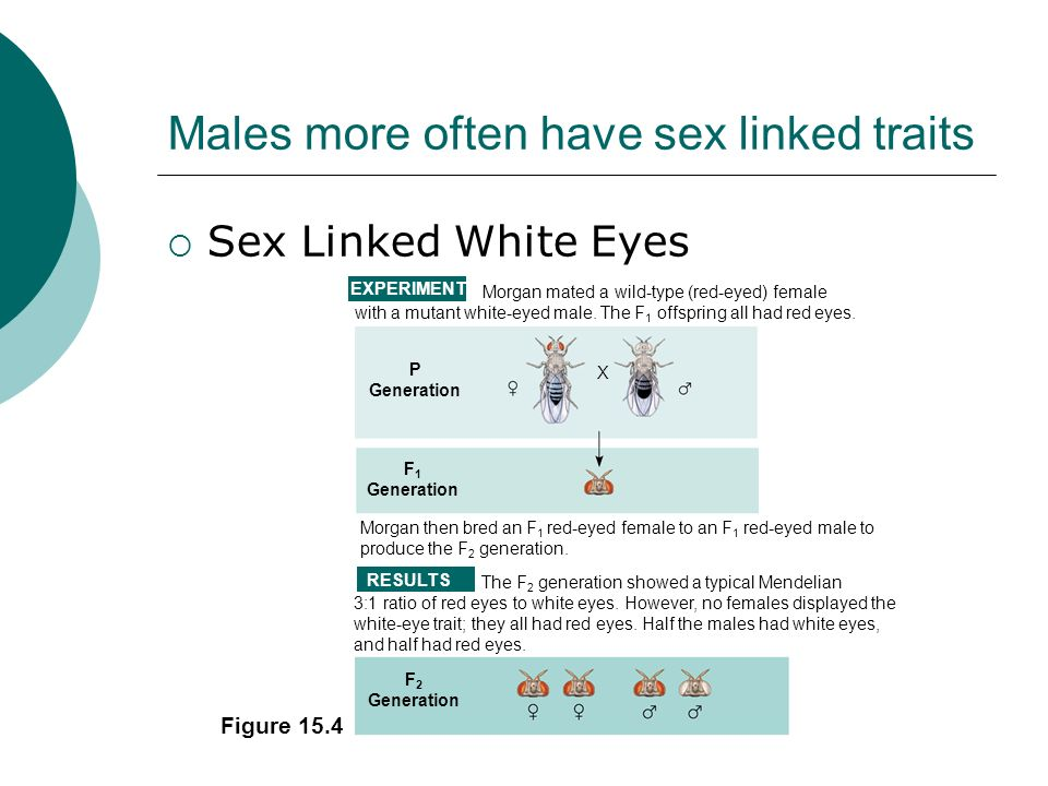 Males more often have sex linked traits