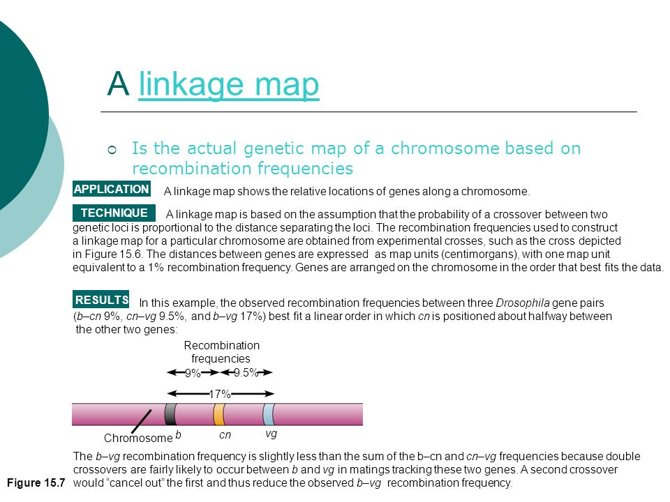 A linkage map Is the actual genetic map of a chromosome based on recombination frequencies. Recombination.