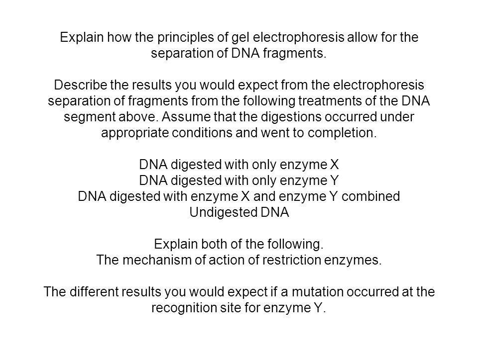 Explain how the principles of gel electrophoresis allow for the separation of DNA fragments.