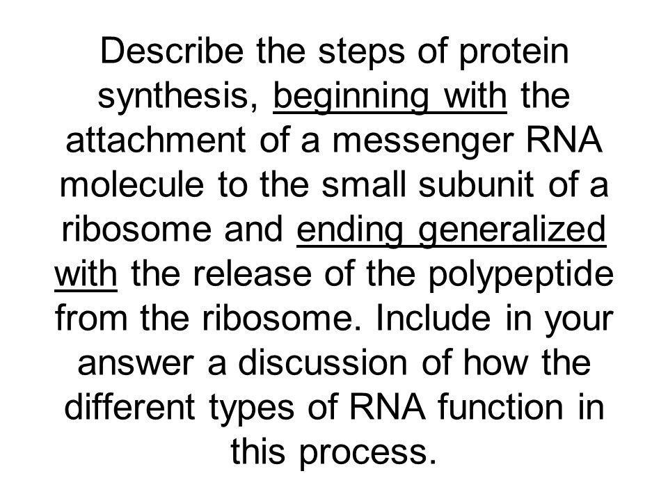 Describe the steps of protein synthesis, beginning with the attachment of a messenger RNA molecule to the small subunit of a ribosome and ending generalized with the release of the polypeptide from the ribosome.