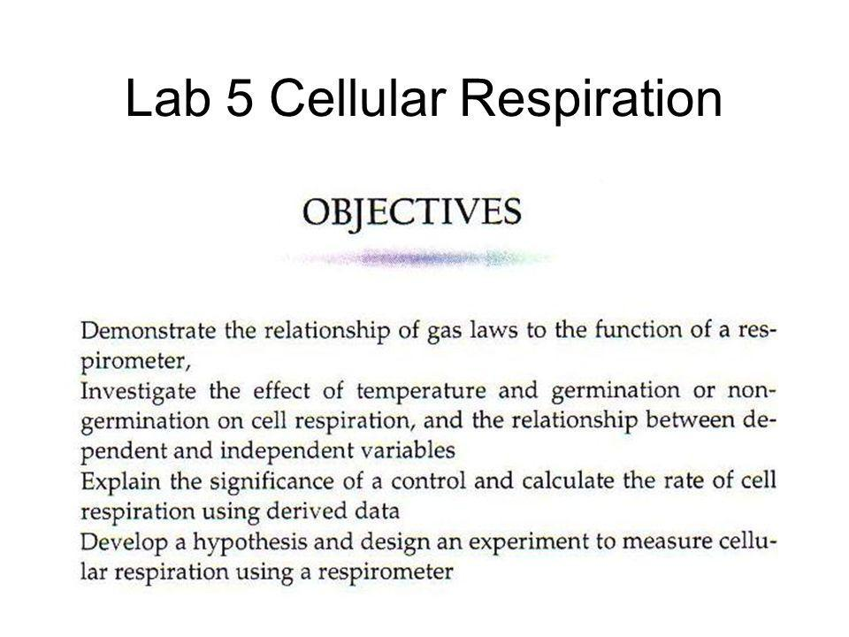 Lab 5 Cellular Respiration