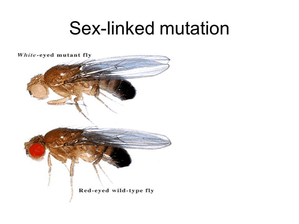 Sex-linked mutation