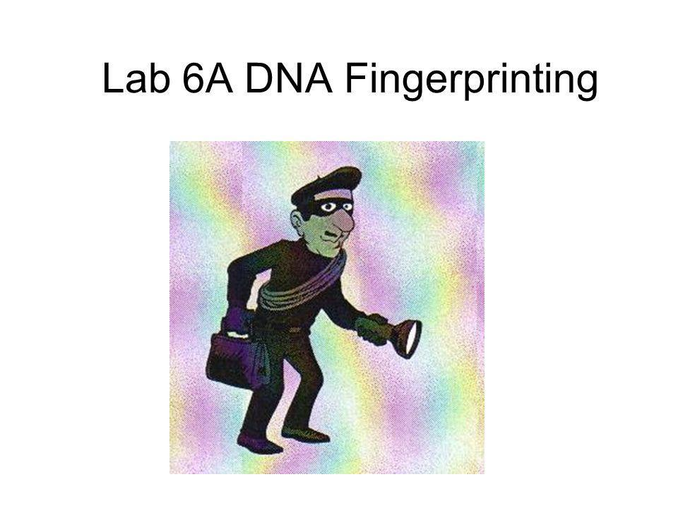 Lab 6A DNA Fingerprinting