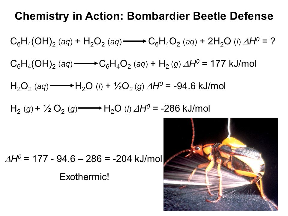 Chemistry in Action: Bombardier Beetle Defense