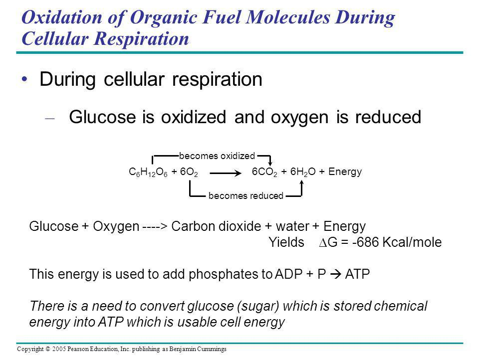 Cellular Respiration: Harvesting Chemical Energy - ppt download