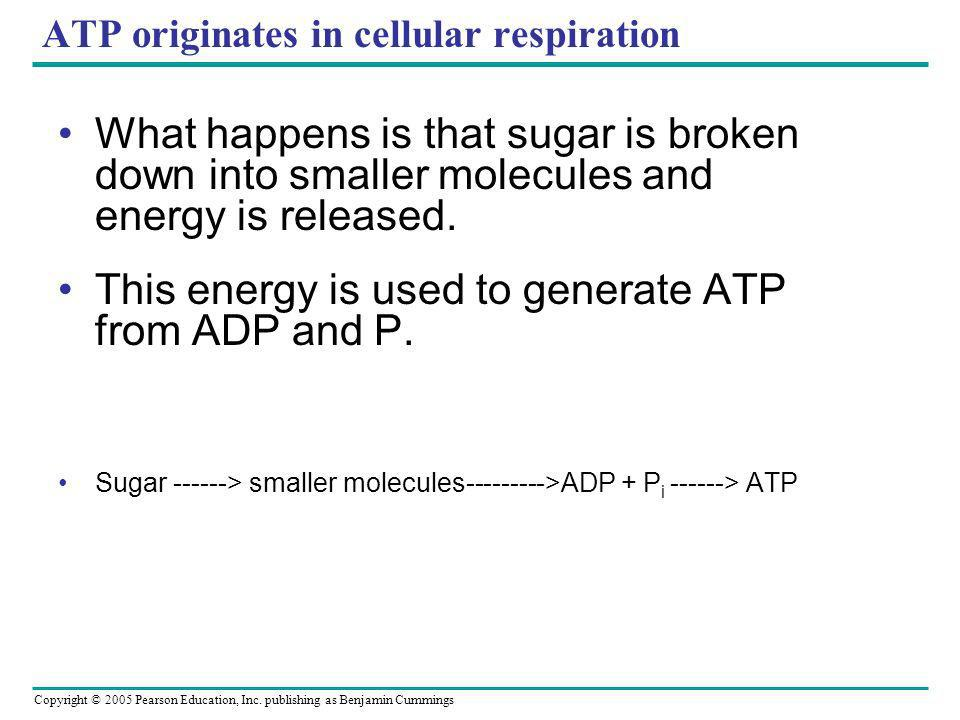 ATP originates in cellular respiration