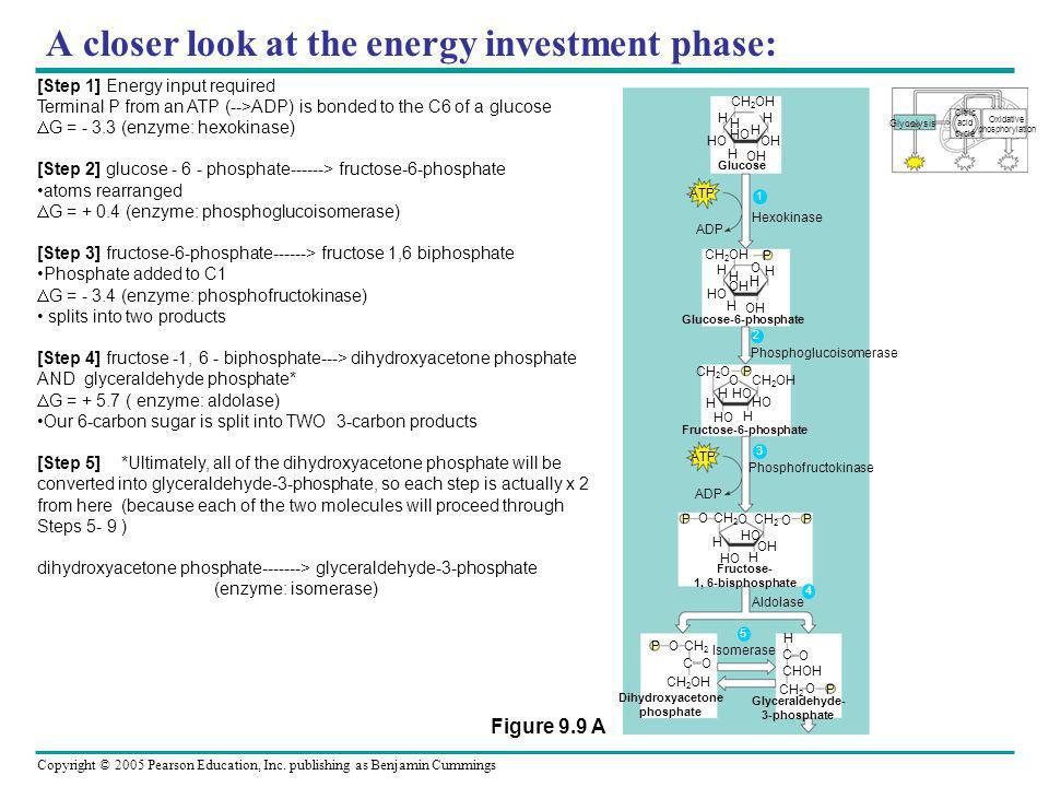A closer look at the energy investment phase:
