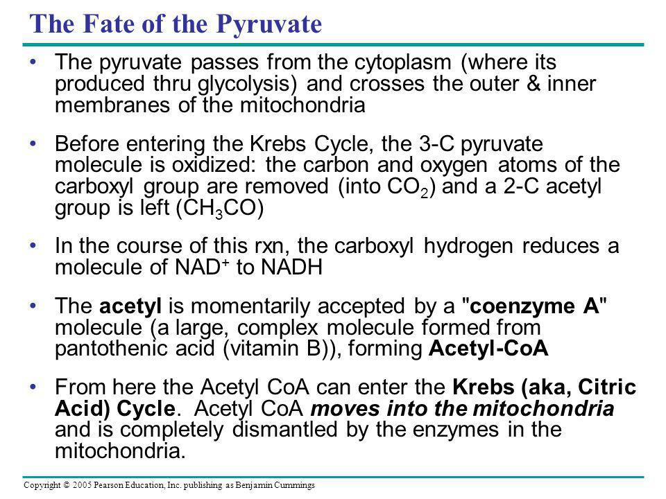 The Fate of the Pyruvate