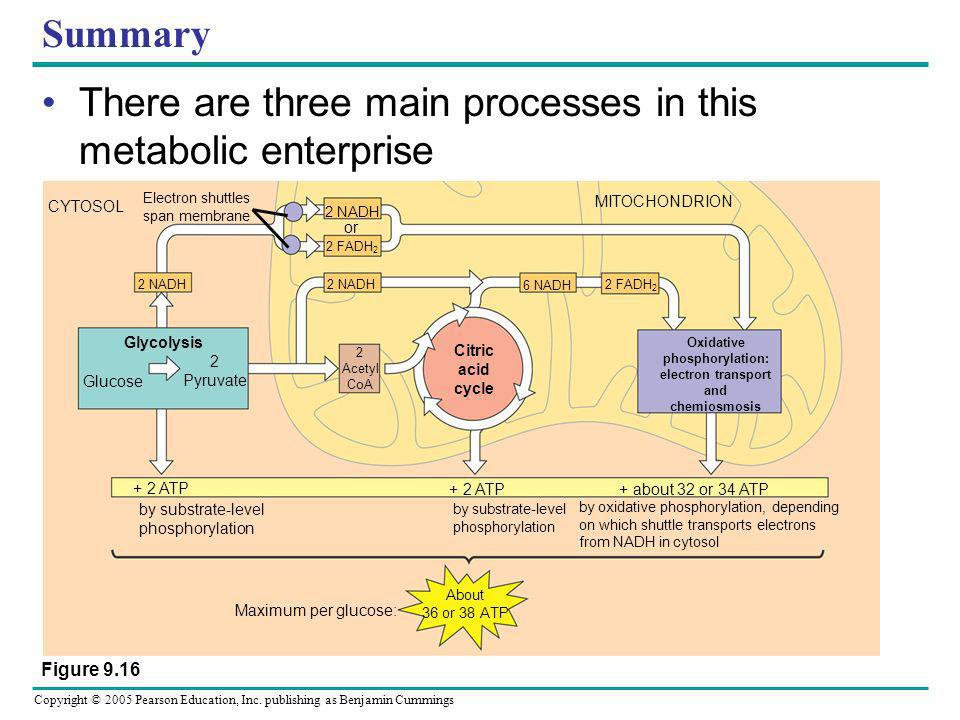 There are three main processes in this metabolic enterprise