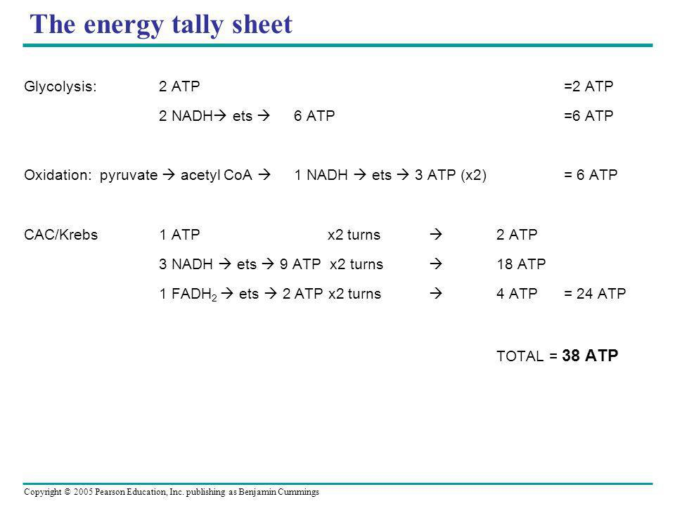 The energy tally sheet Glycolysis: 2 ATP =2 ATP