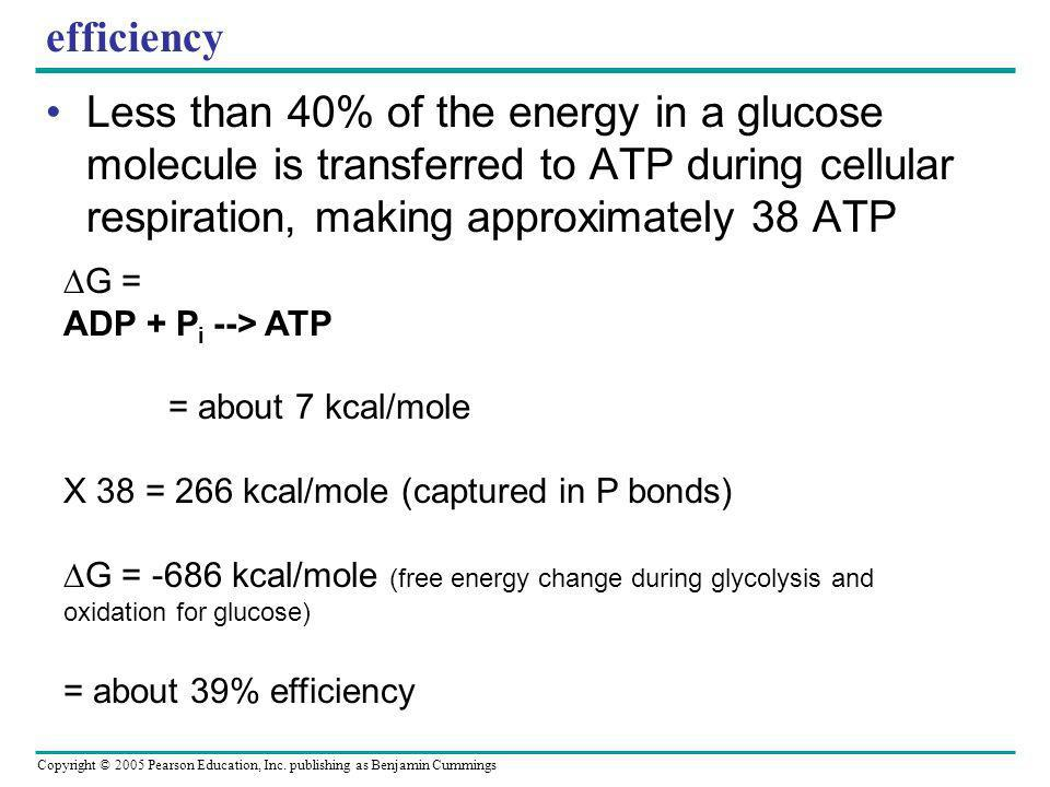 efficiency Less than 40% of the energy in a glucose molecule is transferred to ATP during cellular respiration, making approximately 38 ATP.