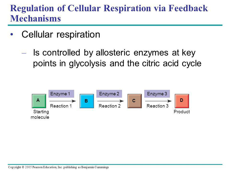 Regulation of Cellular Respiration via Feedback Mechanisms