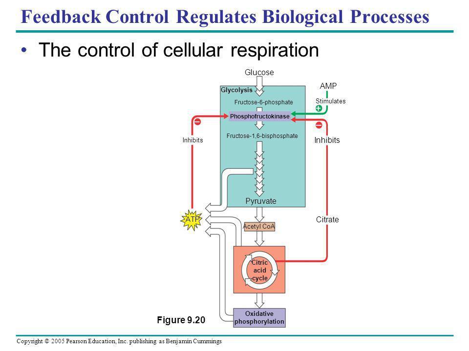 Feedback Control Regulates Biological Processes
