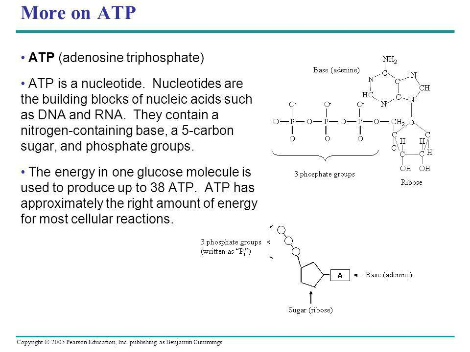 More on ATP ATP (adenosine triphosphate)