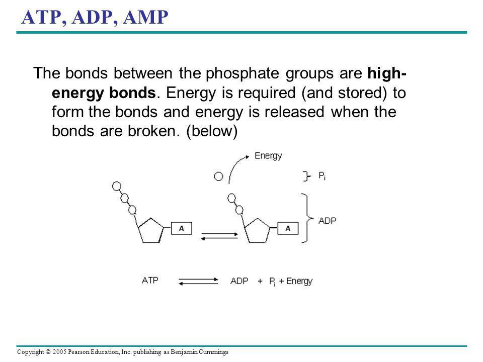 ATP, ADP, AMP