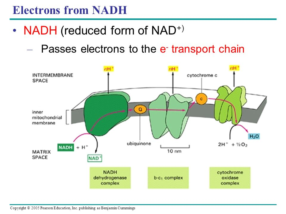 NADH (reduced form of NAD+)