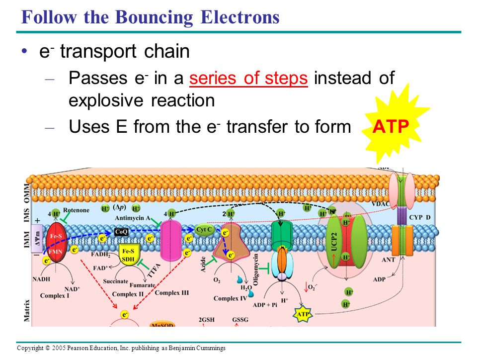 Follow the Bouncing Electrons