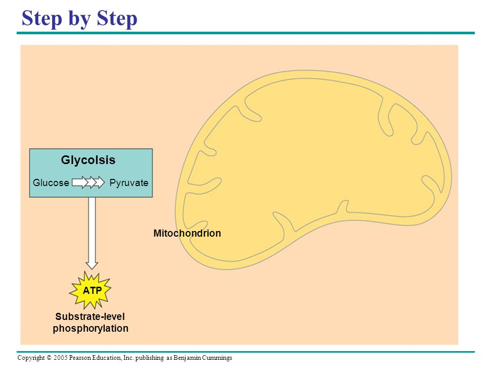 Step by Step Glycolsis Glucose Pyruvate ATP Substrate-level