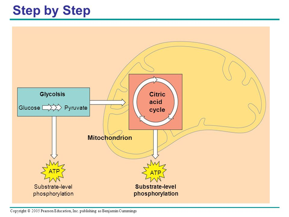 Step by Step Citric acid cycle Mitochondrion ATP Substrate-level