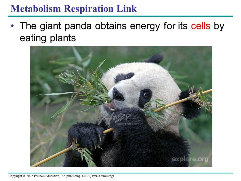 Metabolism Respiration Link