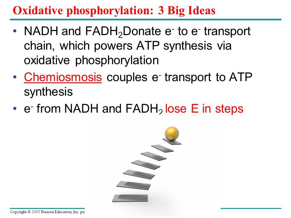Oxidative phosphorylation: 3 Big Ideas