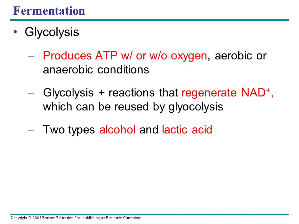 Fermentation Glycolysis
