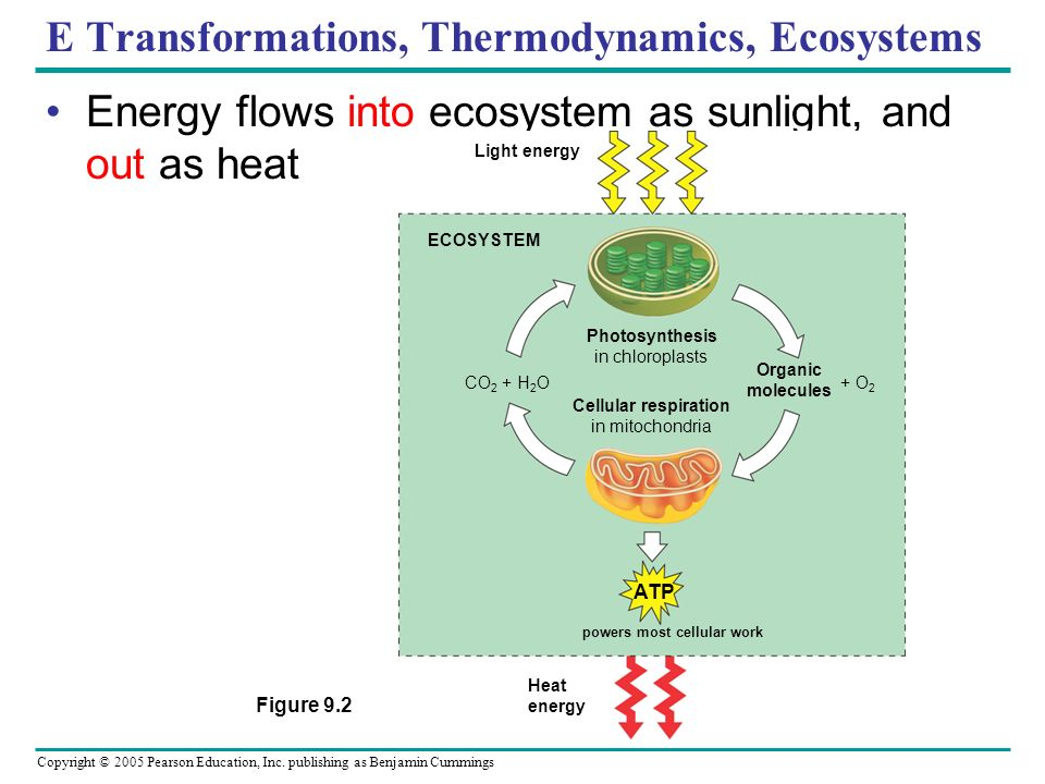 E Transformations, Thermodynamics, Ecosystems