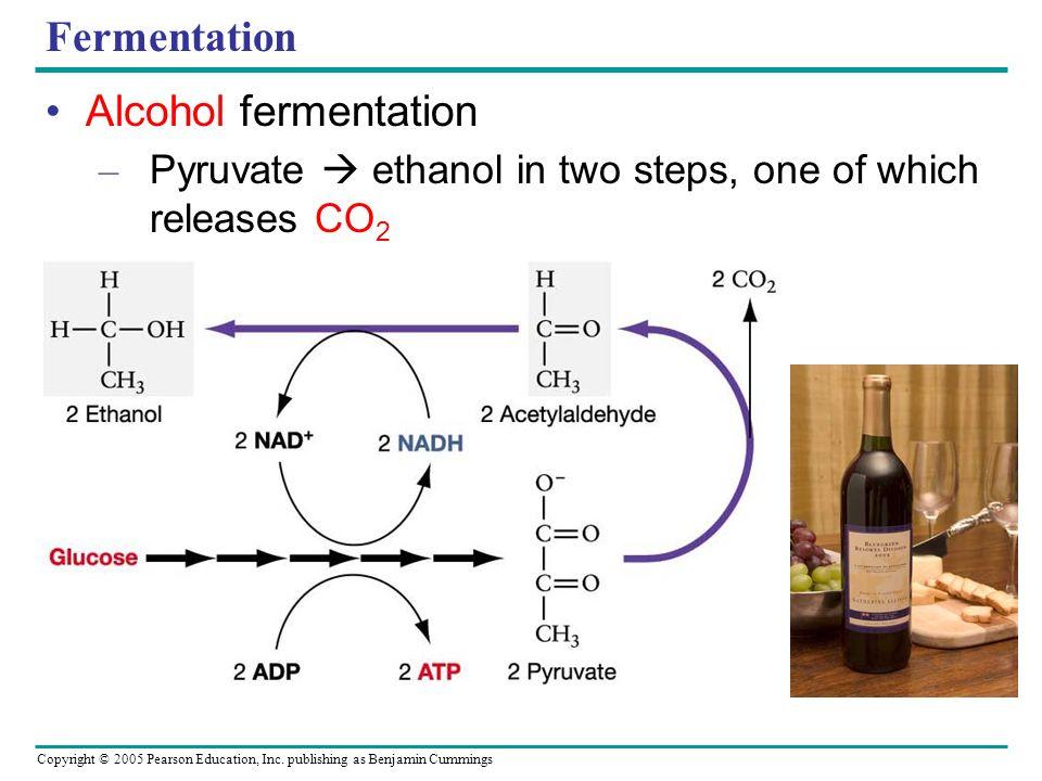 Fermentation Alcohol fermentation