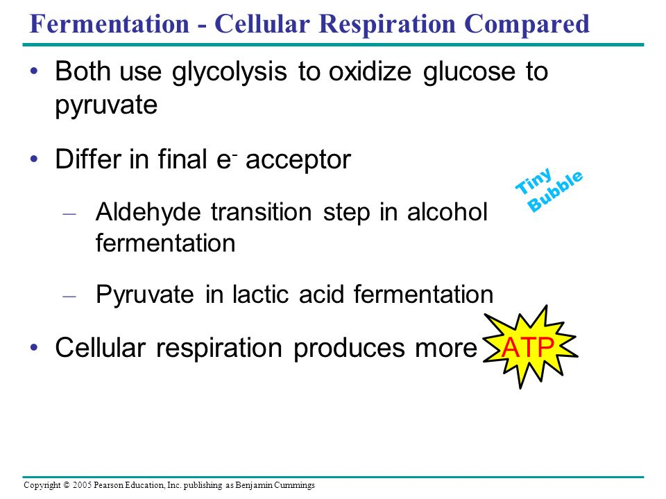 Fermentation - Cellular Respiration Compared
