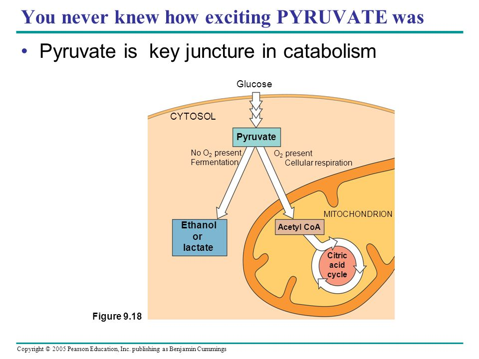 You never knew how exciting PYRUVATE was