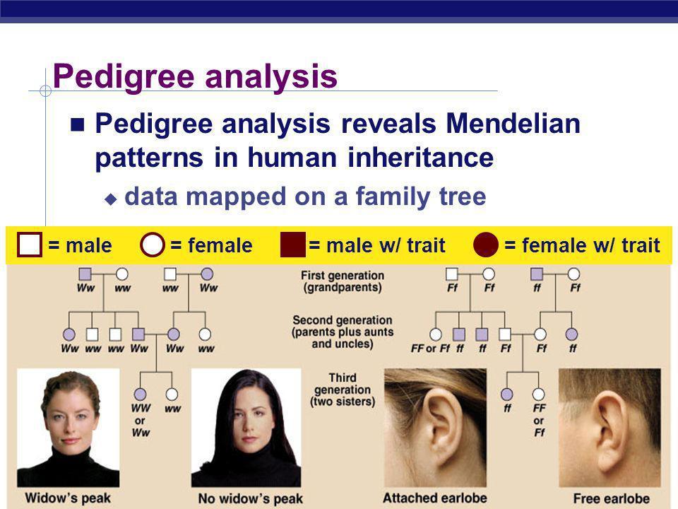 Pedigree analysis Pedigree analysis reveals Mendelian patterns in human inheritance. data mapped on a family tree.