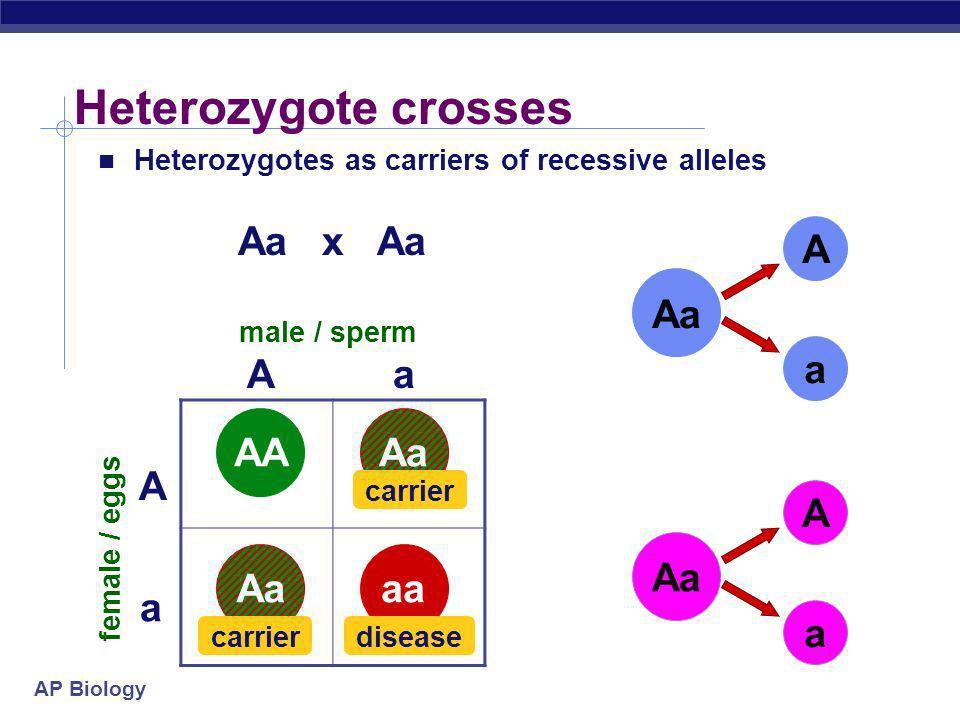 Heterozygote crosses Aa x Aa A a Aa A a AA Aa AA Aa A a A a Aa Aa aa