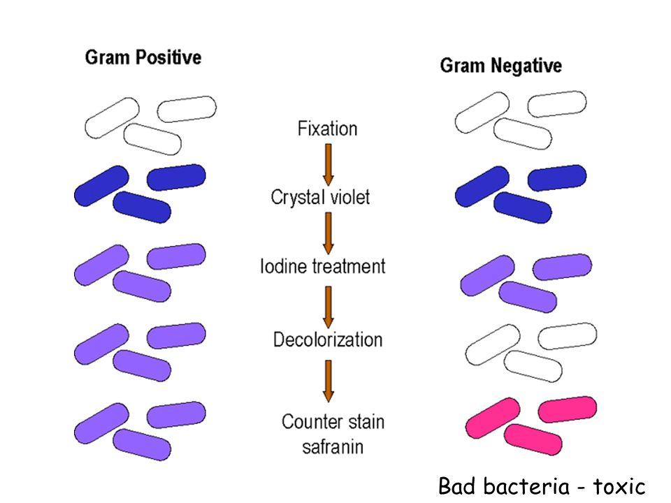 Bad bacteria - toxic