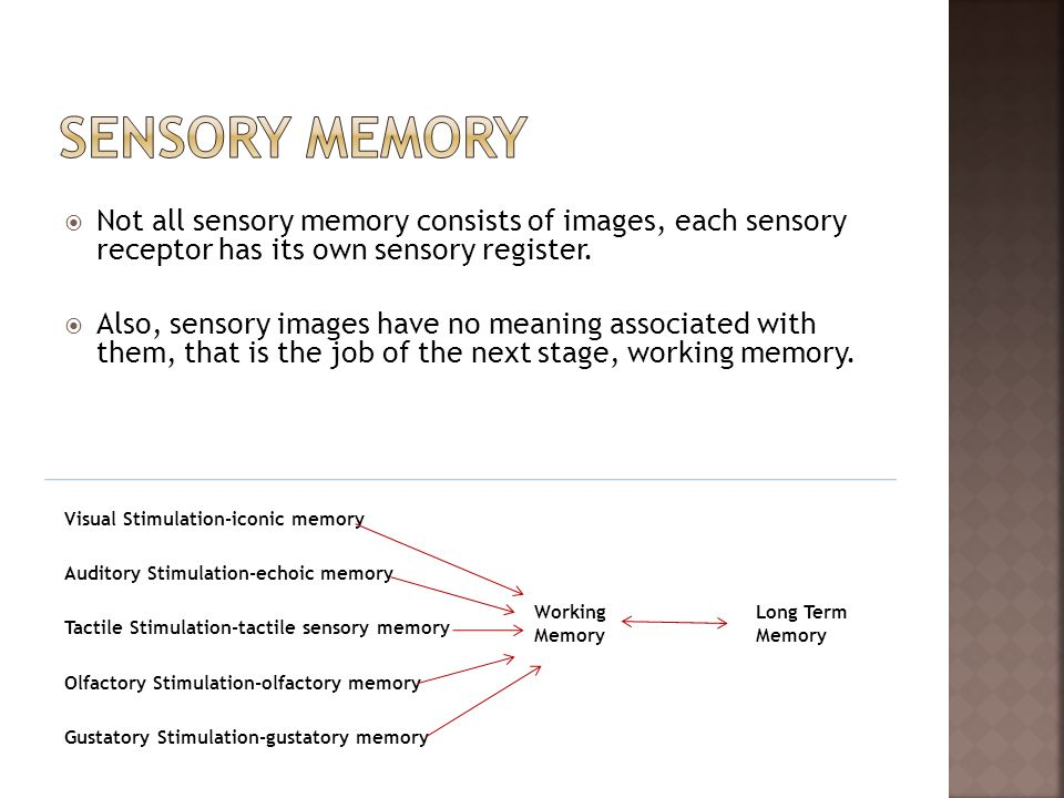 Sensory Memory Not all sensory memory consists of images, each sensory receptor has its own sensory register.