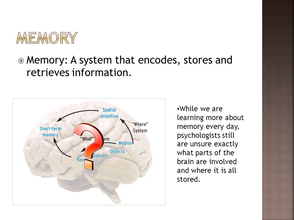 Memory Memory: A system that encodes, stores and retrieves information.