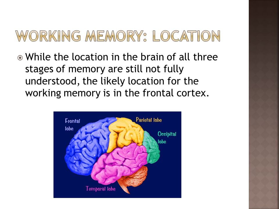 Working memory: location