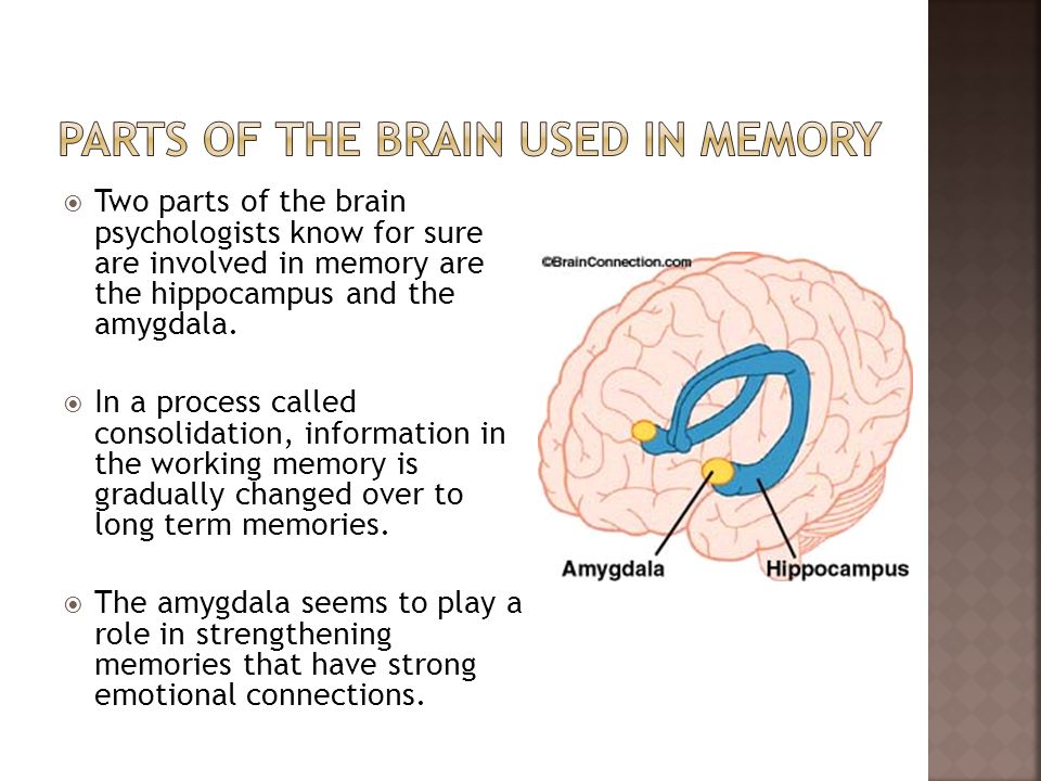 Parts of the brain used in memory