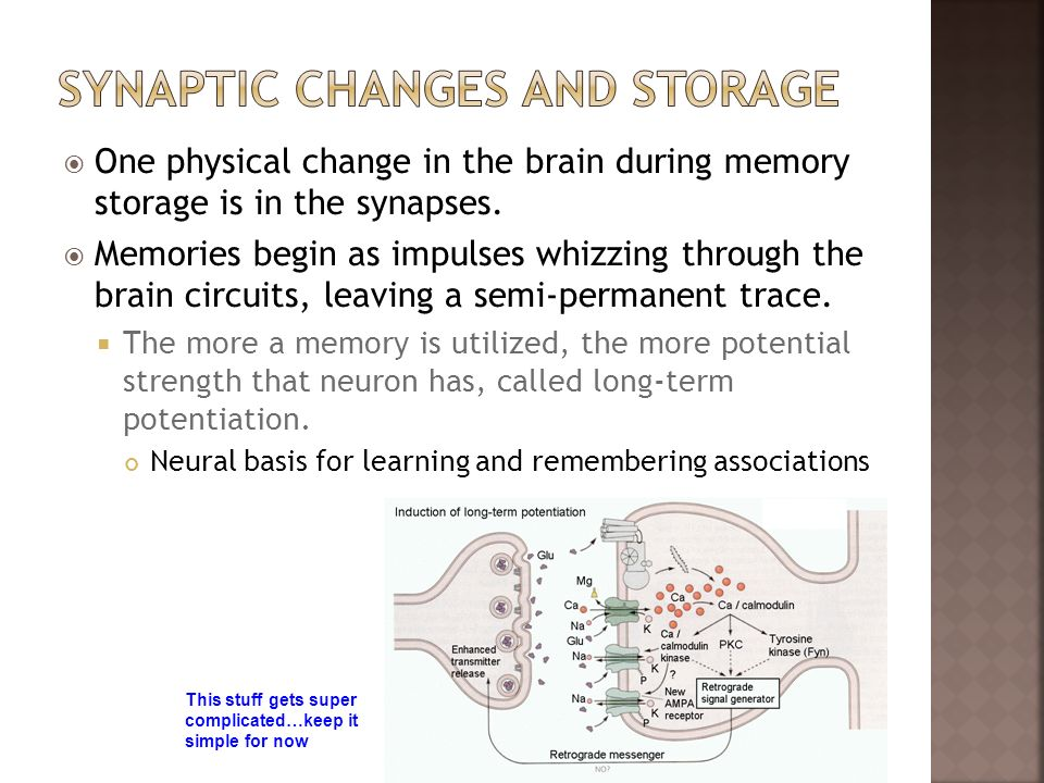 Synaptic Changes and storage