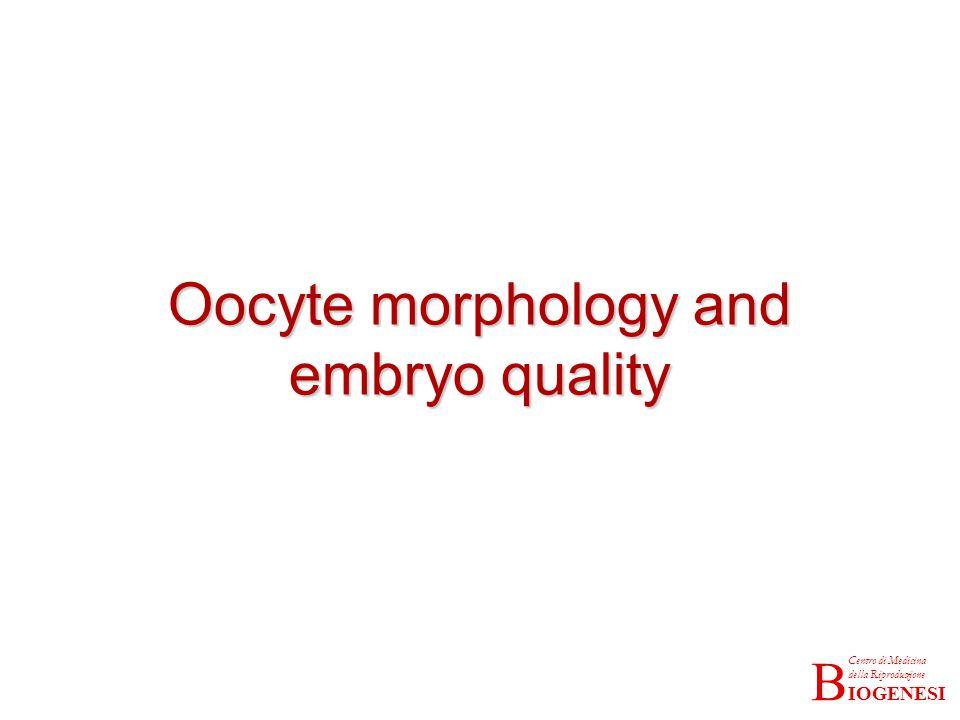 Oocyte morphology and embryo quality