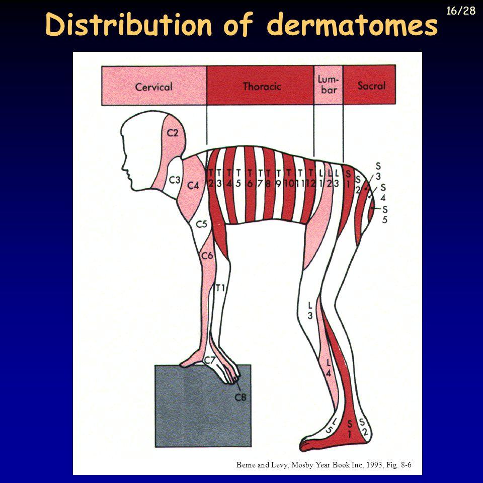 Distribution of dermatomes
