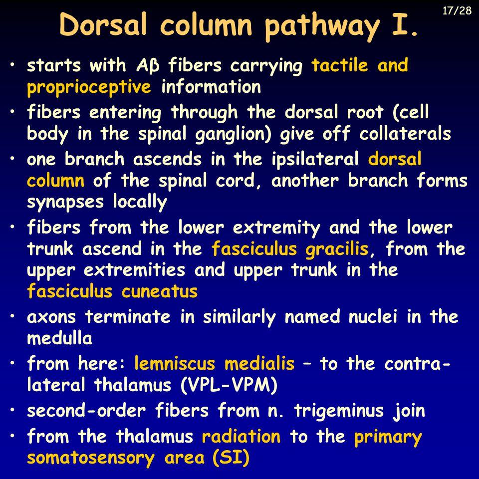 Dorsal column pathway I.